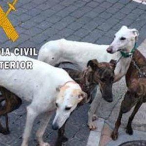 Denunciados por furtivear liebres durante la cuarentena, en época de cría y con perros indocumentados