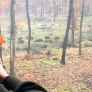 Le entran cientos de jabalíes en una batida y no sabe a cuál disparar