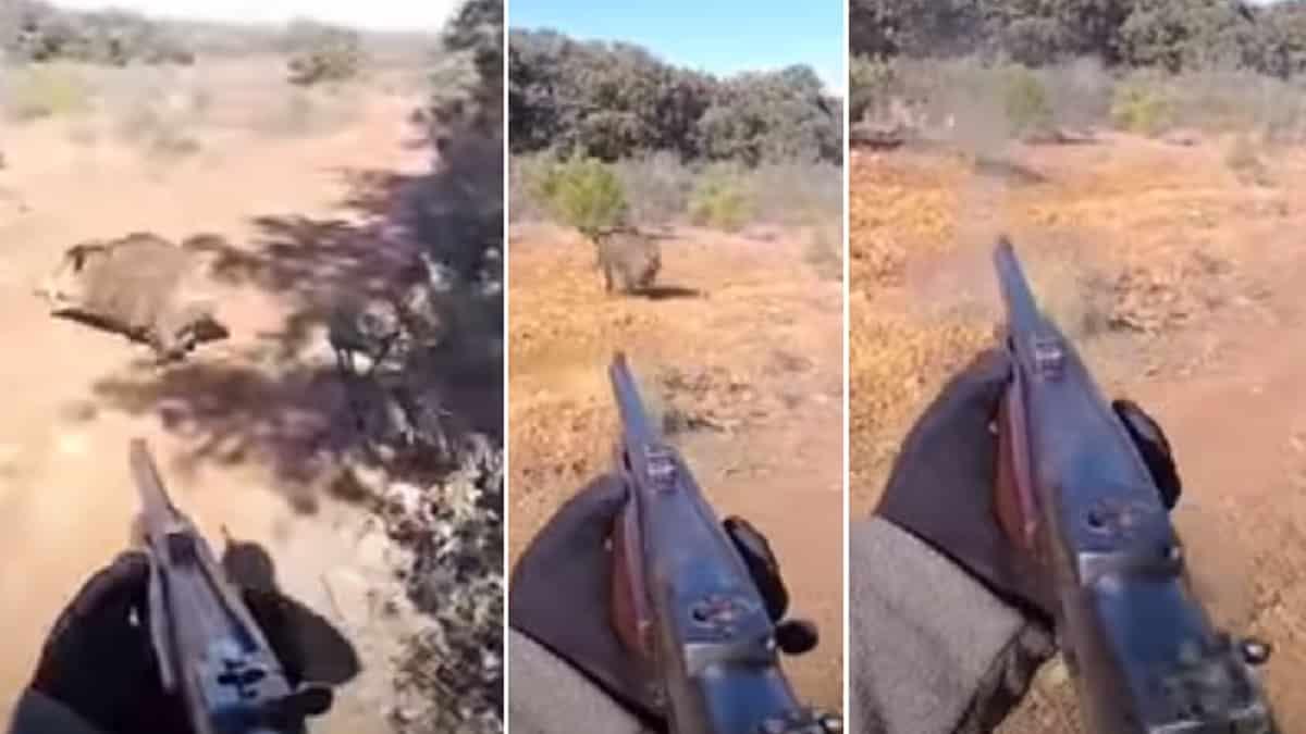 Un jabalí pasa tan cerca de este cazador ¡que casi se lleva su silla!