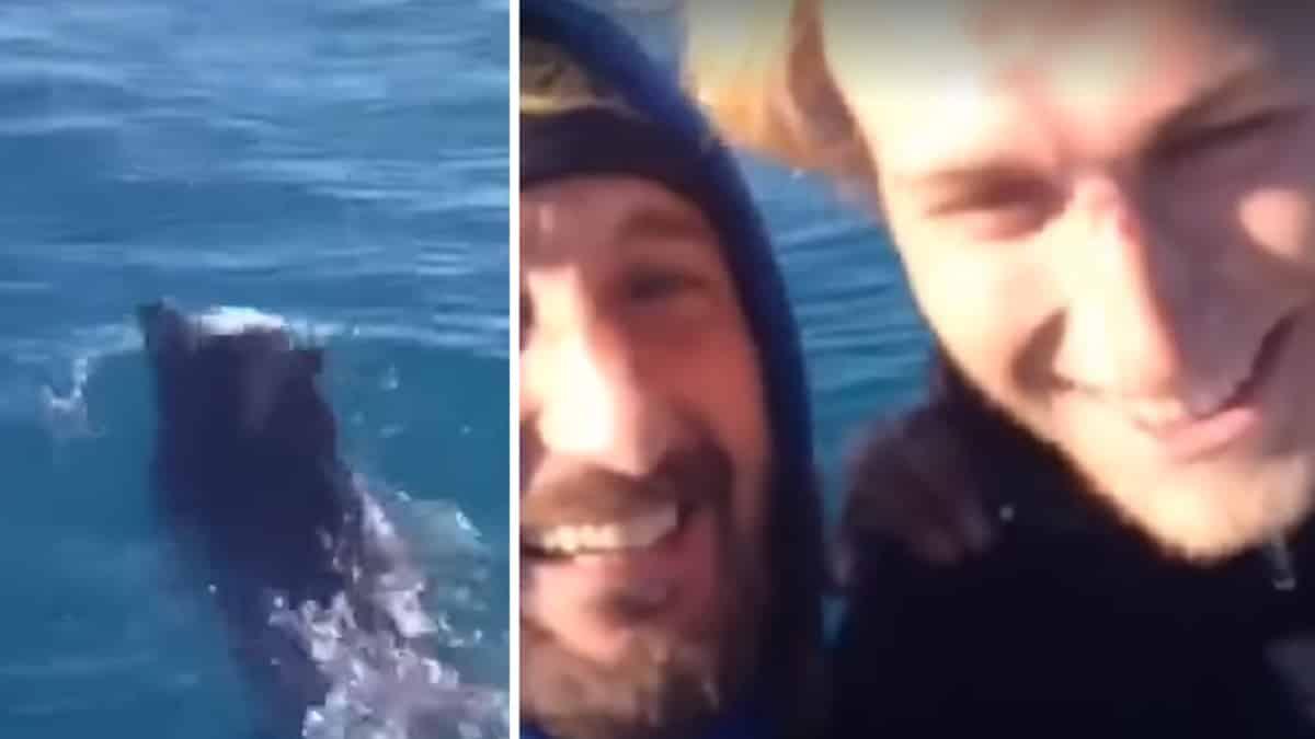 Dos pescadores se encuentran un jabalí en mitad del mar y ¡mira lo que hacen!