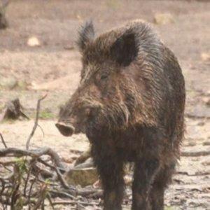 VOX propone que la caza sea reconocida como actividad esencial durante el estado de alarma
