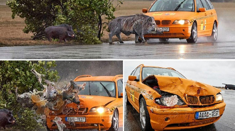 Atropellando 'jabalíes': así prueban los nuevos sistemas de seguridad de los coches