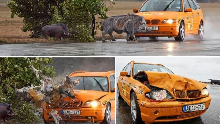 Alemania animales