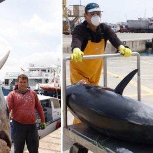 Pesca un monstruoso atún de más de 116 kilos al curricán