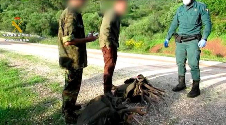 Dos jóvenes son detenidos e investigados por robar desmogues de ciervo aprovechando el estado de alarma
