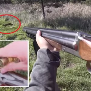 Así se cazan zorros, conejos, liebres y perdices con una escopeta de tres cañones del calibre 20