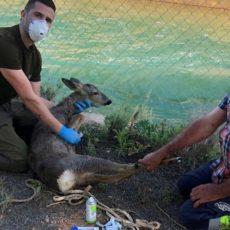 Los cazadores, los únicos que toman medidas para frenar el ahogamiento de animales en canales