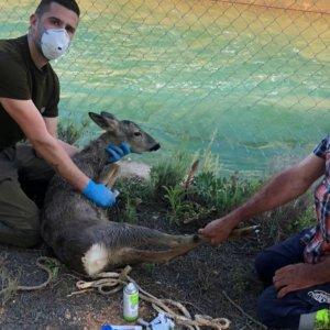Un joven héroe caza dos corzos y salva la vida a otros 32