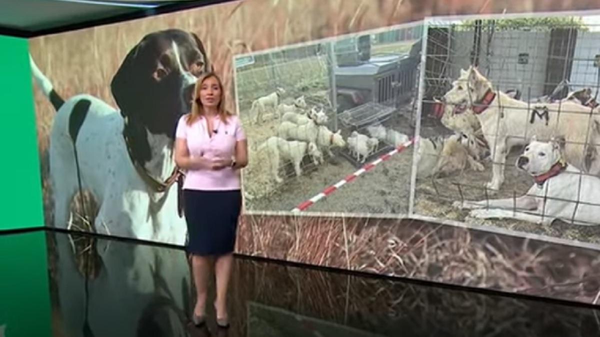 Antena 3 se hace eco de las necesidades de los perros de caza durante el confinamiento