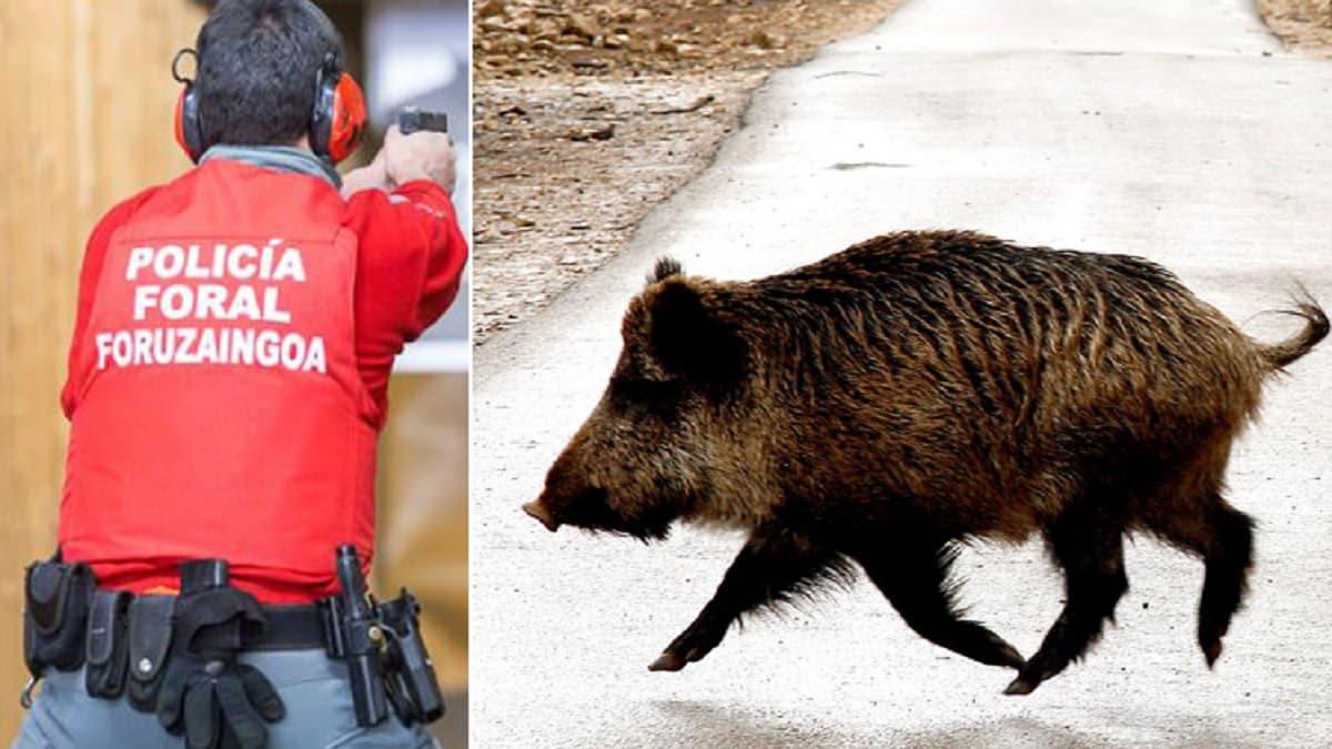 Atropellan un jabalí en Pamplona y la Policía lo remata a tiros