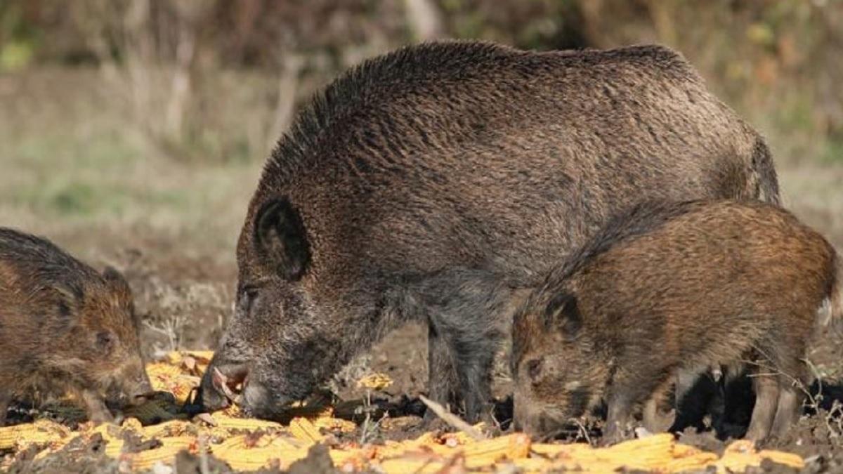 El Gobierno retoma las cuestiones de caza con la Federación a través del MAPA
