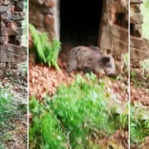 Se acerca a una caseta en mitad del monte ¡y sale un jabalí corriendo por la puerta!
