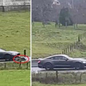 Graban el instante exacto en el que un Ford Mustang se estrella contra un jabalí