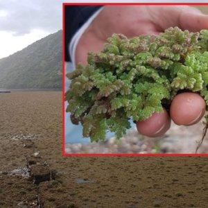 Preocupante imagen del río Tajo: esta planta invasora podría poner en peligro a todos los peces