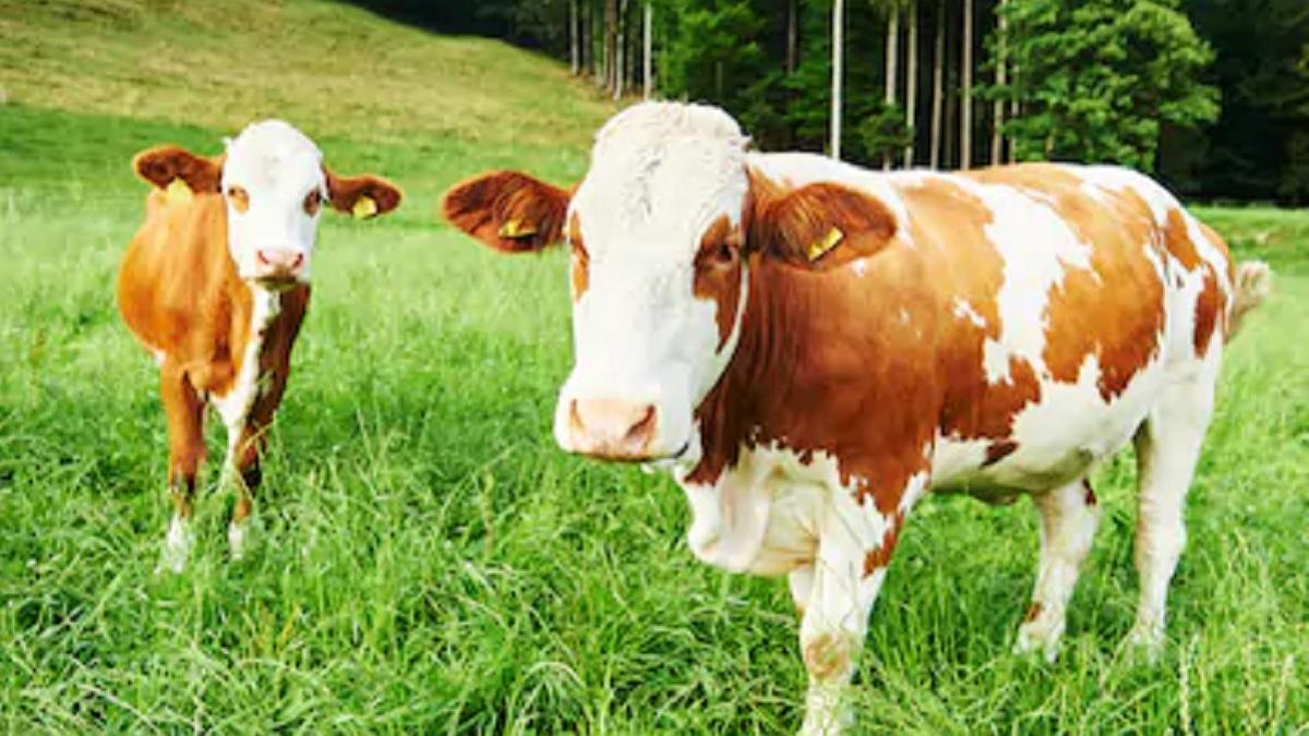 Agricultores y ganaderos exigen disculpas a los ecologistas que los culparon del cambio climático
