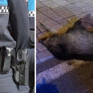 La Policía tiene que matar a tiros a un jabalí agresivo en Vigo