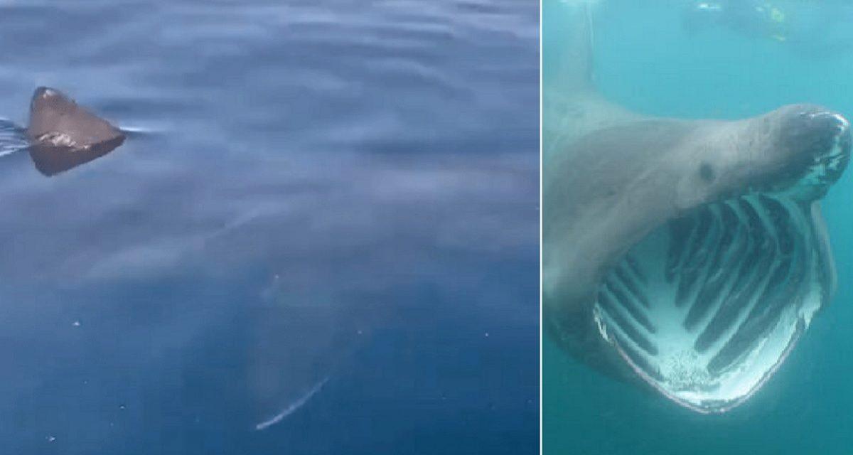 tiburón málaga