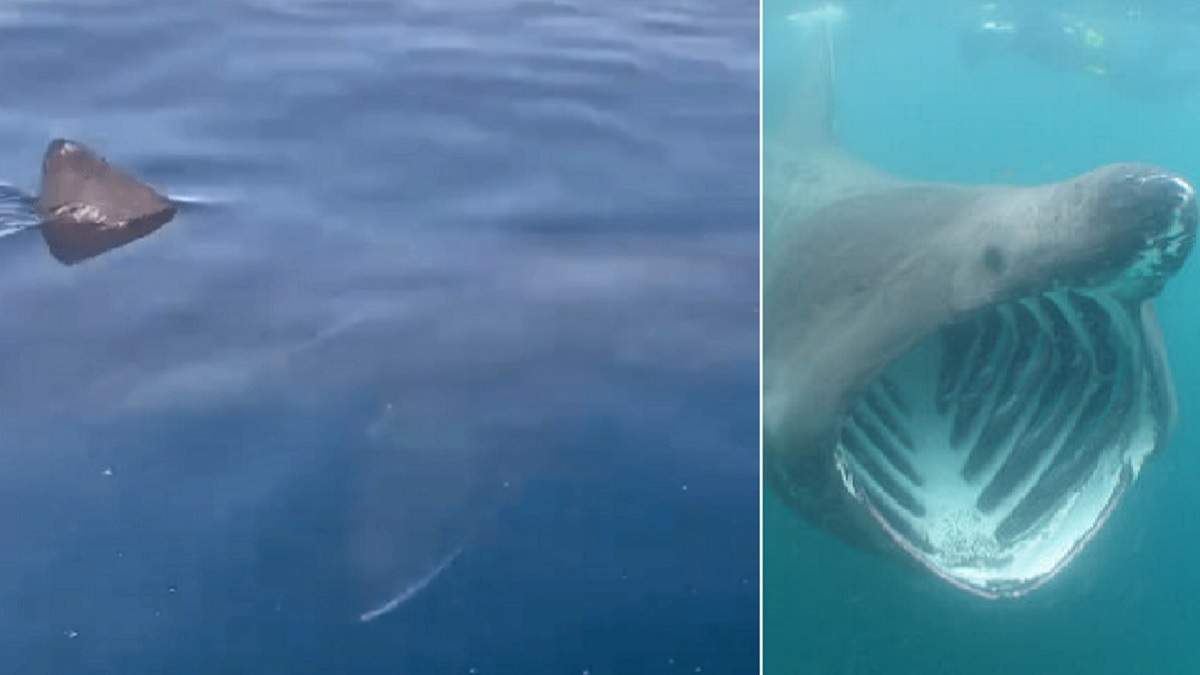 Graban a un tiburón de siete metros frente a la costa de Málaga