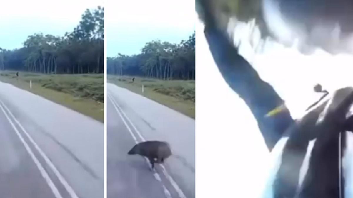 Un motorista graba el terrorífico momento en el que choca a toda velocidad contra un jabalí