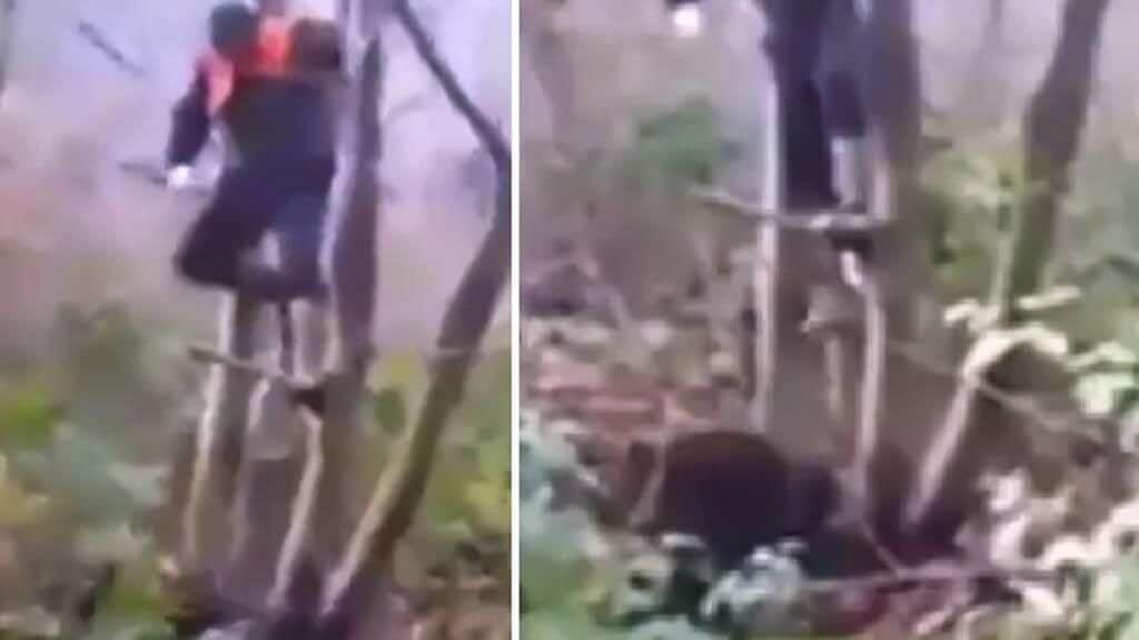 Un cazador se tiene que subir a un árbol para escapar del ataque de este jabalí