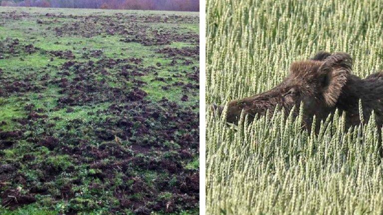 agricultura caza
