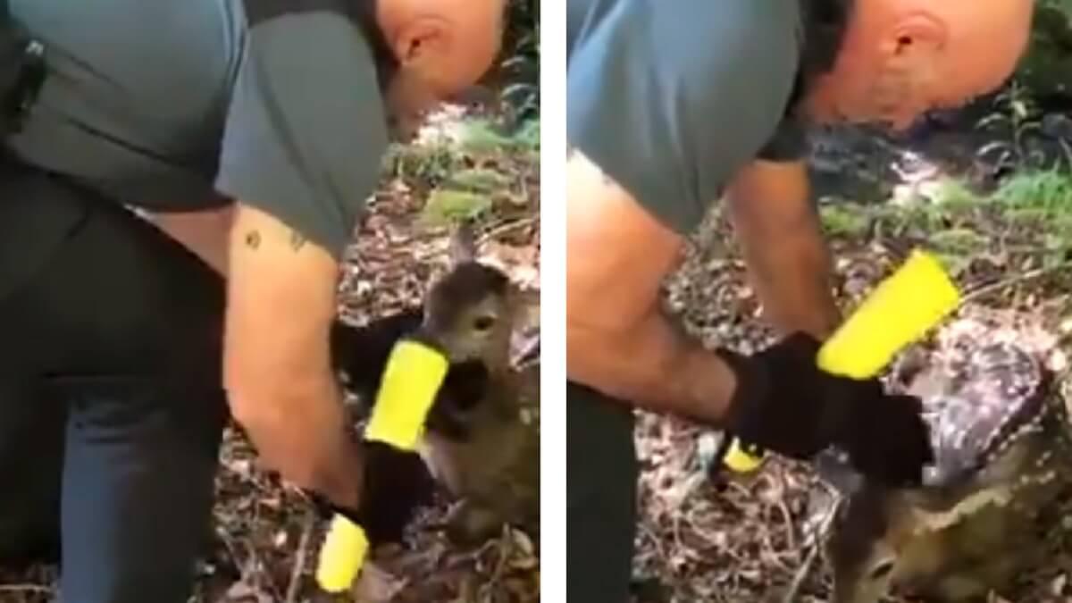 Un Guardia Civil se graba manoseando a un cría de ciervo y los cazadores le advierten de su gravísimo error