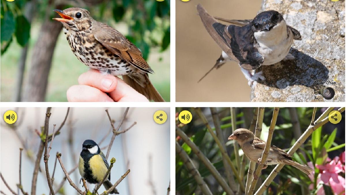 Cómo identificar a las aves por su canto: esta web te muestra hasta 85 especies