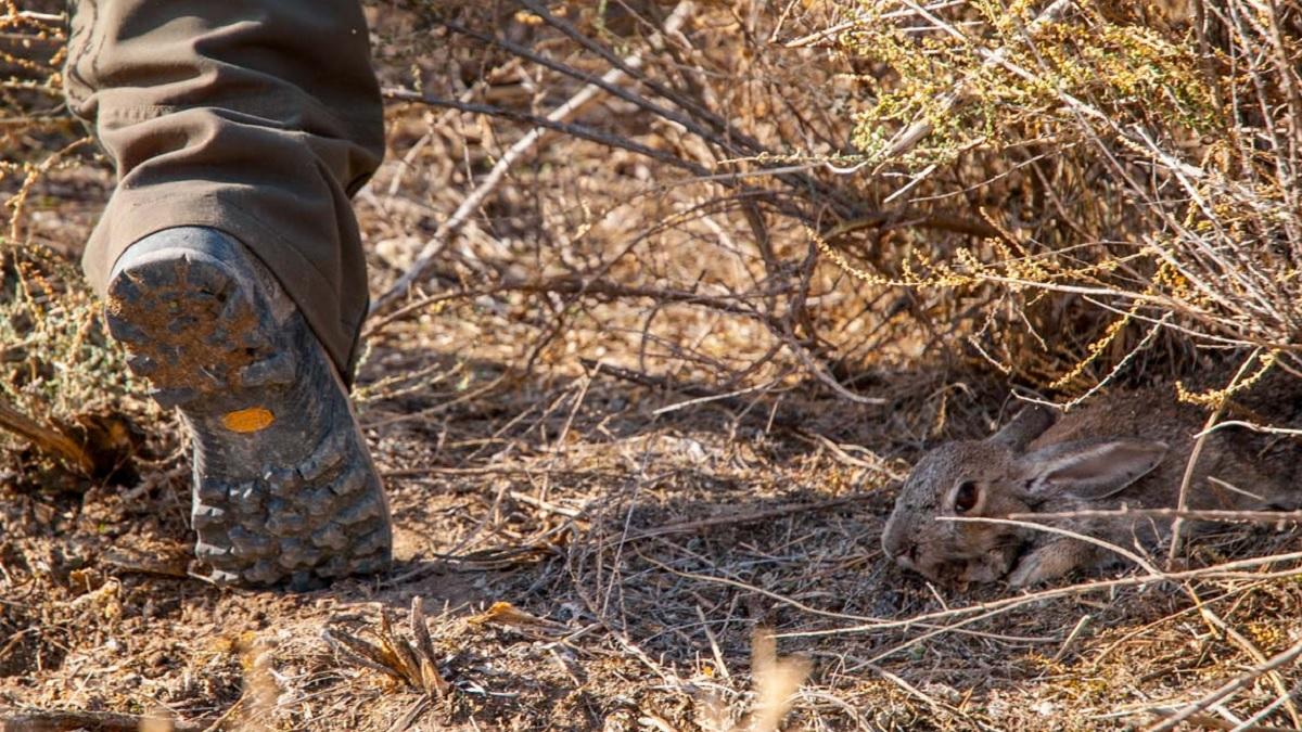 Las 20 peores (y más repetidas) excusas de un cazador tras fallar una perdiz, liebre o conejo