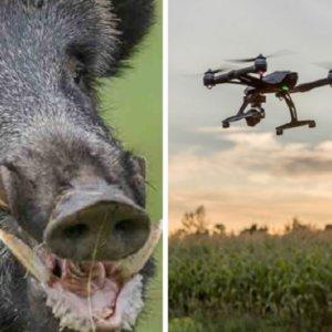 Agentes rurales de Lleida utilizan drones con cámaras térmicas para localizar jabalíes