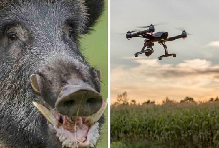jabalí dron