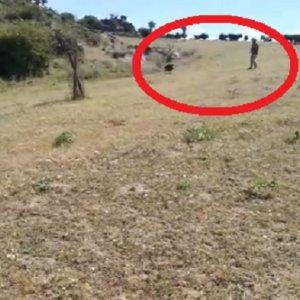 Un jabalí ataca a un cazador en el campeonato de Extremadura de tiro con arco