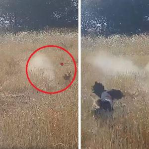 Un cazador instala una cámara en su escopeta y graba este fallo estrepitoso a un conejo