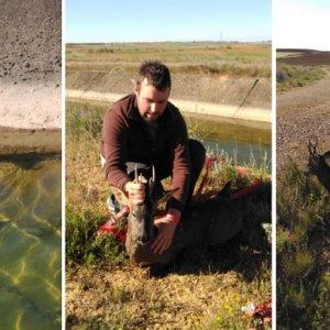 Una pareja de novios que iba a cazar salva a un corzo agonizante de morir ahogado