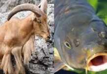¿Cómo afecta a la caza y a la pesca la sentencia del TS sobre especies invasoras?