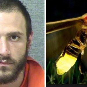 Condenado a cárcel tras drogarse y disparar a luciérnagas creyendo que eran 'aliens'