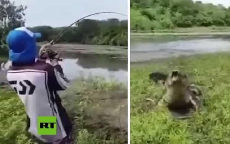 Un pescador captura un gran pez pero… un cocodrilo lo ataca