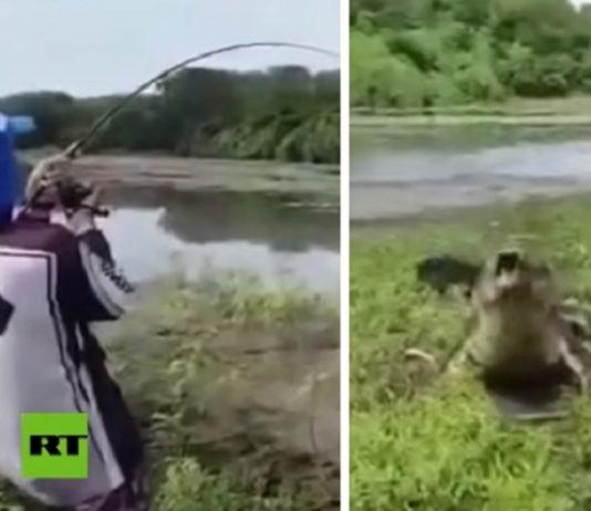 cocodrilo pescador