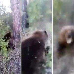 Graba el impactante momento en el que un oso le ataca