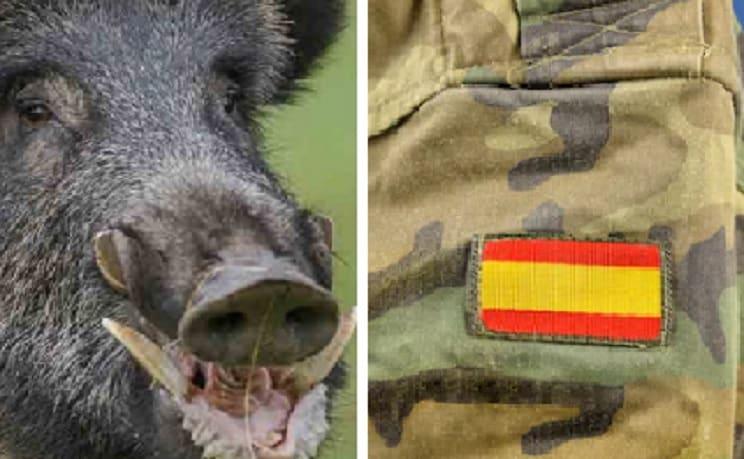 Sugieren que el Ejército intervenga para controlar la población de jabalíes en Galicia