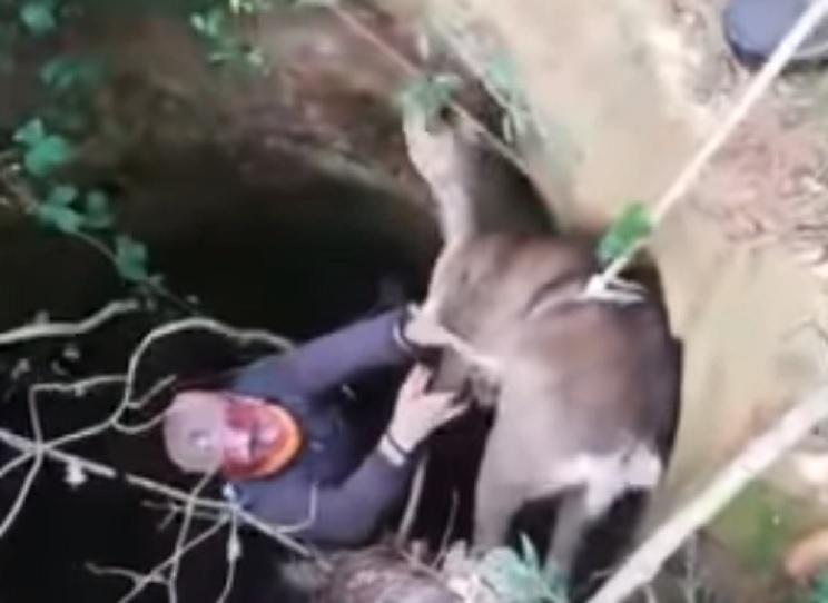 Un grupo de cazadores rescata a una corza que agonizaba en un pozo en León