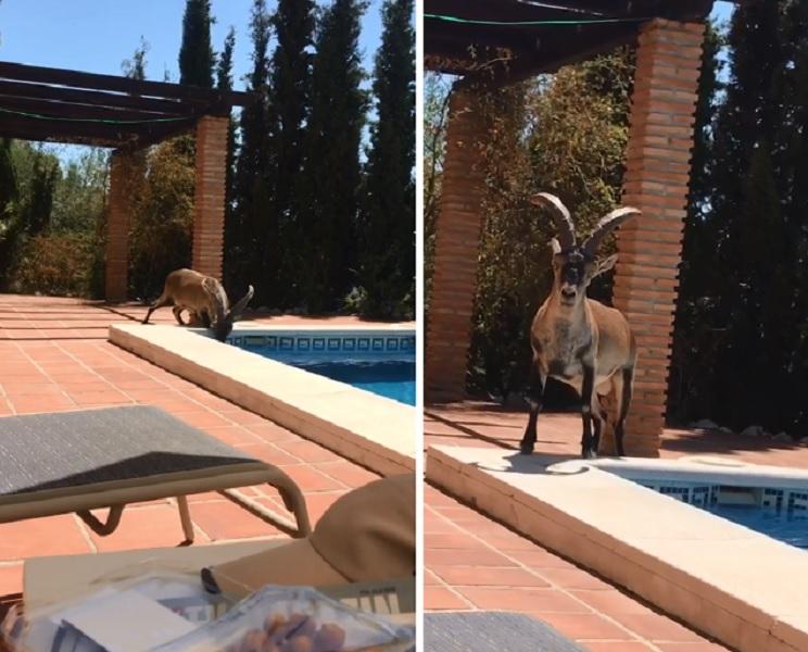 macho montes piscina