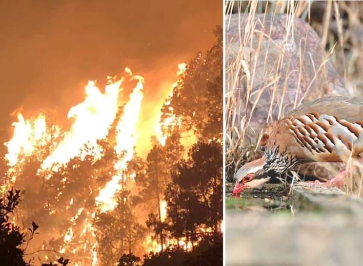 Los cazadores, los primeros en ayudar a la fauna silvestre tras los incendios de Canarias