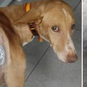 Detenido un hombre que disparó al perro de un cazador