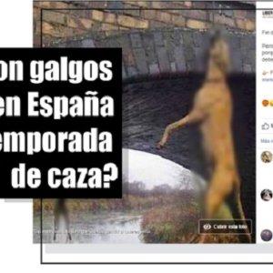 Desmentida otra noticia falsa de Libera sobre los perros de caza en España