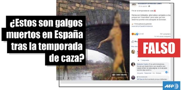 agencia perros caza
