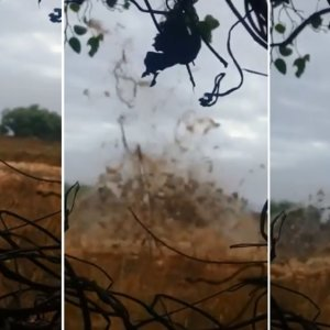 El vídeo de una gigantesca trampa para tórtolas indigna a los cazadores