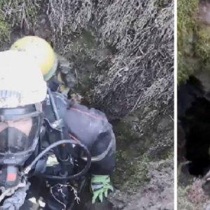 Bomberos de Ponferrada rescatan a dos perros de caza que cayeron a 40 metros