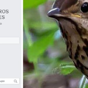 Zorzaleros Españoles vuelve a Facebook con un nuevo grupo tras la censura del anterior