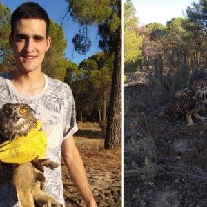 Un cazador rescata a un búho malherido en Valladolid: «Espero que se recupere muy pronto»