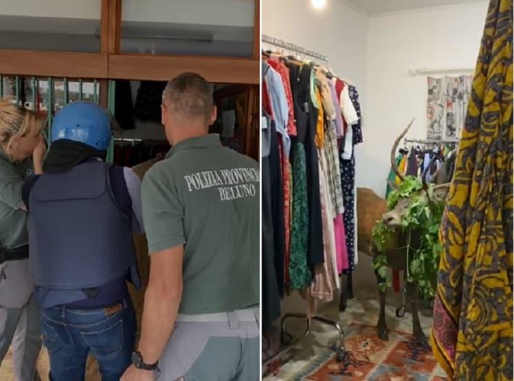 Un ciervo se cuela en una tienda de ropa y la Policía prepara un gran despliegue
